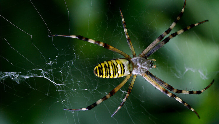 Amazon örümceklerinin esrarengiz dünyalarına gitmeye hazır olun.