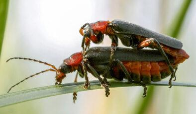 Hayvanların ilginç çiftleşme biçimlerini National Geographic görüntüledi.